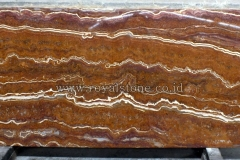 Red Trionyx